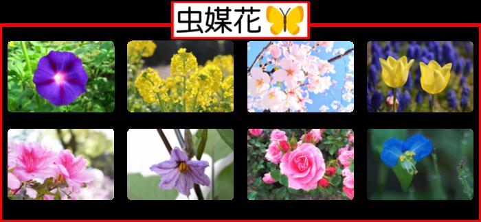 風媒花・虫媒花の花粉の違いと植物の例がスグにわかる!【風・虫・鳥・水】